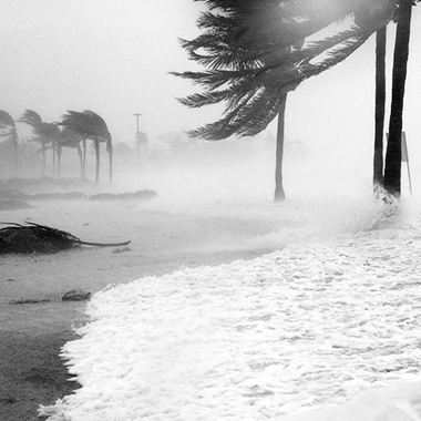 a beach with trees in storm winds